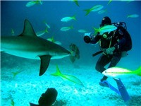 Dive trips in the Bahamas - none will be beat custom dives with Tim Higgs.  Cave diving, blue hole diving, reef wall diving, Bahamas National parks, shark dives, etc.