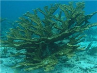 Sandy Cay Reef - Tourist Attraction in