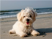 Pet Friendly Rentals Properties