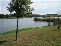 Lovely lakes located on property