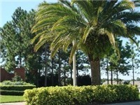 Florida Pines with its lovely landscaping.