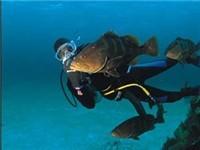 Brendal feeding his grouper