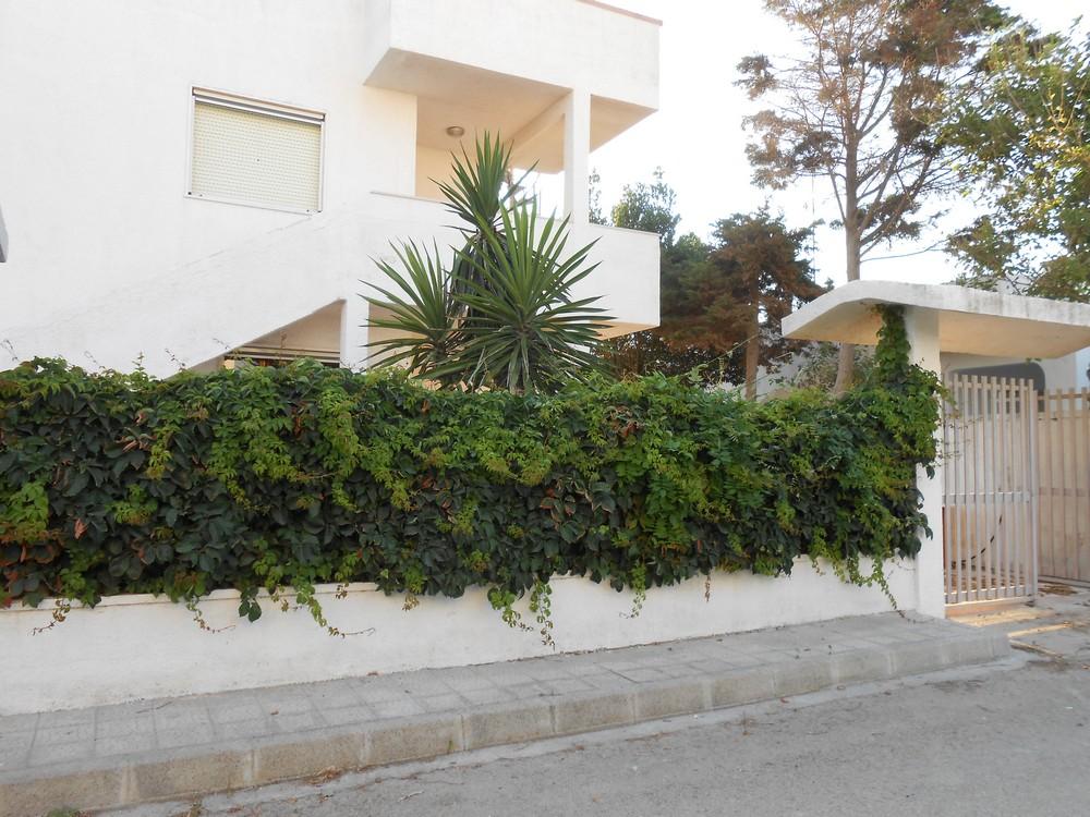 Ferienhaus Tina Appartamento - Close up (2354097), Torre Lapillo, Lecce, Apulien, Italien, Bild 1