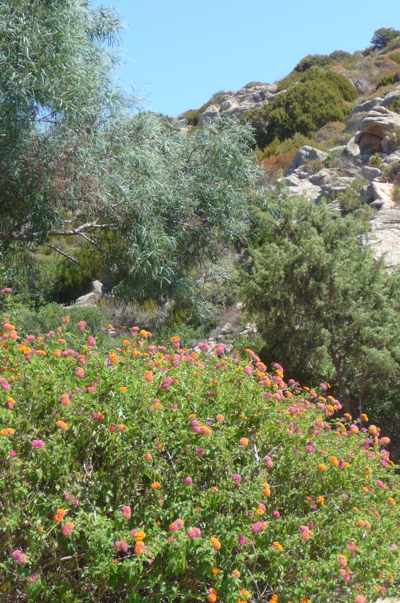 Ferienwohnung Cottage-Apartment On The Coast Surrounded By Unspoilt Nature (2230692), Canneddi, Olbia-Tempio, Sardinien, Italien, Bild 13