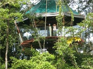 Tree House in Manzanillo