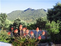 Monte Circeo from the Garden
