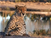 Kruger Park Area