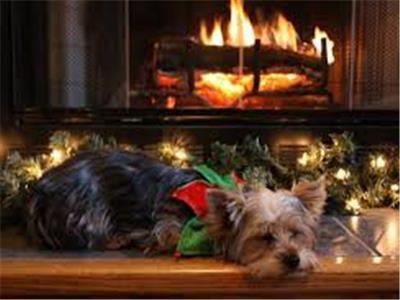Dog Friendly Homes Properties