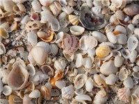 Sanibel and Captiva Island Shelling & Beaches  - Beach in