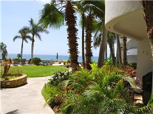 Large palms