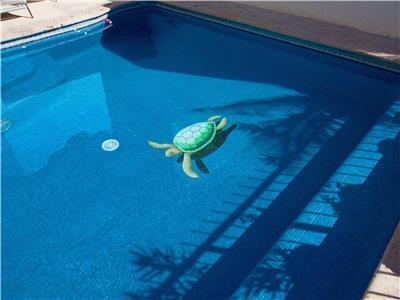 Even the turtles like to swim in the pool