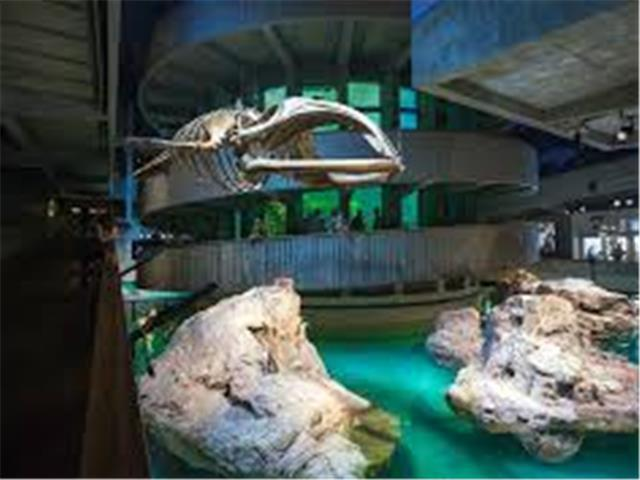 New England Aquarium In Ma All Seasons Attraction