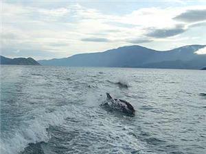 slide dolphins