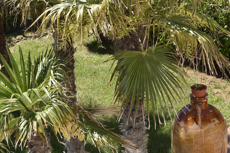 Ferienhaus Villa Giulietta a 5 metri dalla sabbia (2354049), Porto Cesareo, Lecce, Apulien, Italien, Bild 100